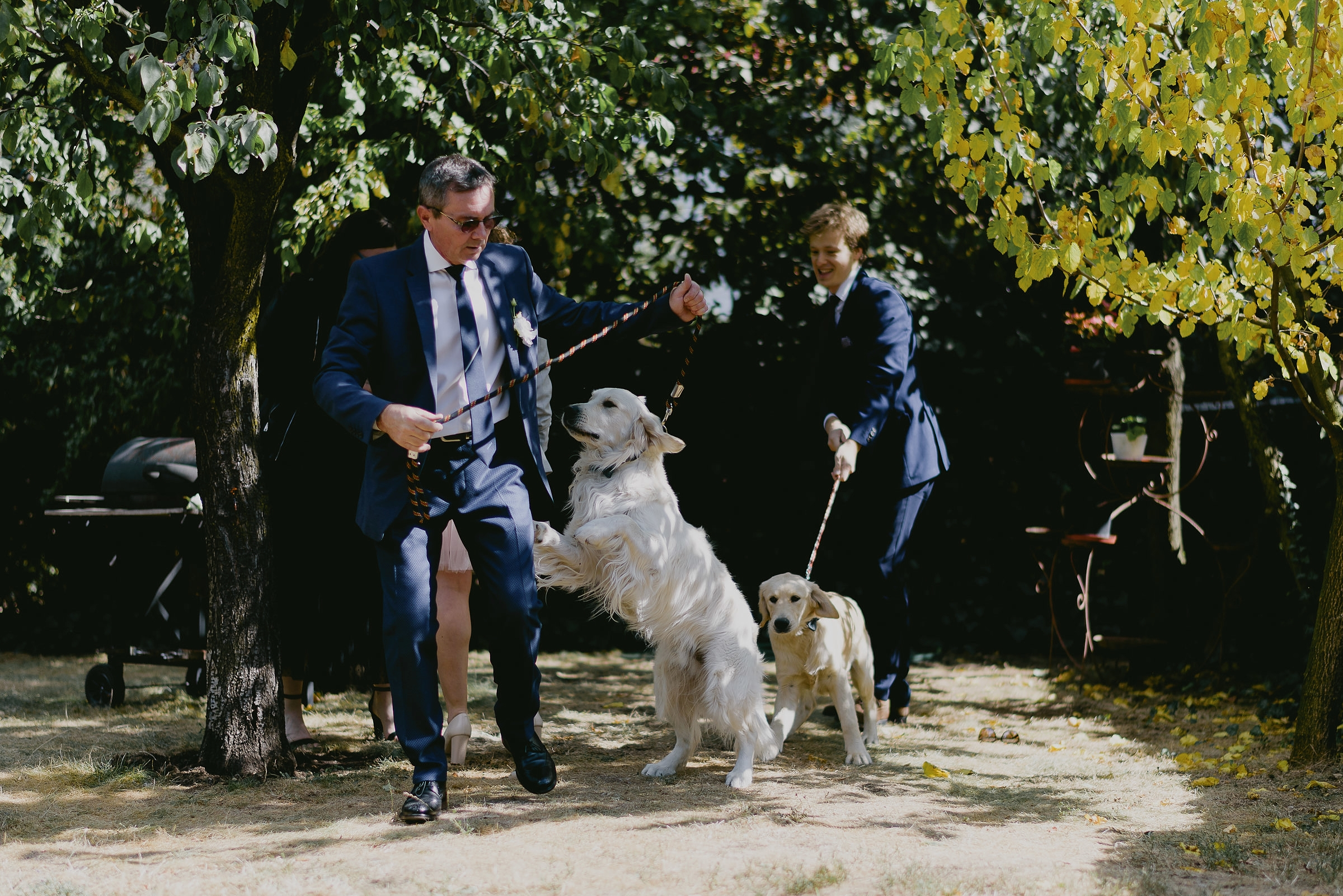 dogs at wedding cluj